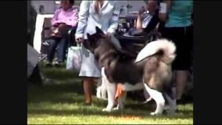 Santa Cruz Kennel Club Dog Show 3-19-09 Vallejo  Ca Continued
