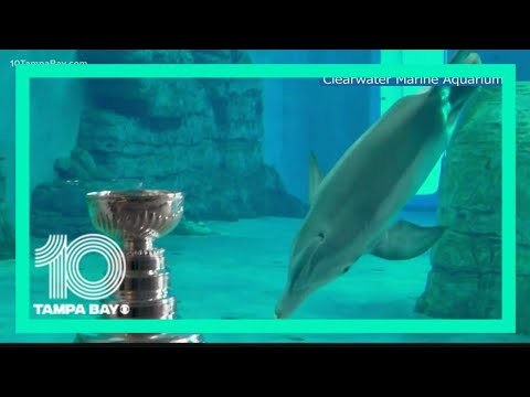 Lightning show off Stanley Cup to dolphins at Clearwater Mar
