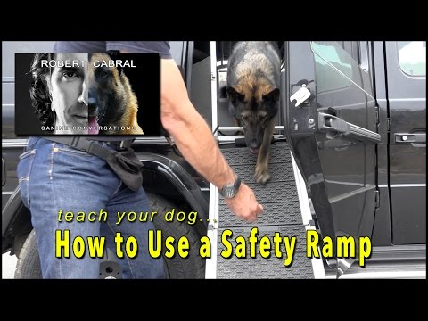 Safety Ramp for Dogs, teach your dog how to use one! - Robert Cabral Dog Training & Safety