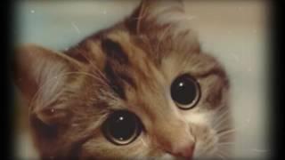 Вы тоже любите котиков? Милые картинки