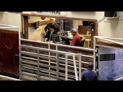 2018 KAA Livestock Auctioneer Championship
