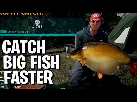 Catch Big Fish Faster - Carp Tourney - Fishing Sim World - Guide