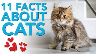 11 amazing facts about cats