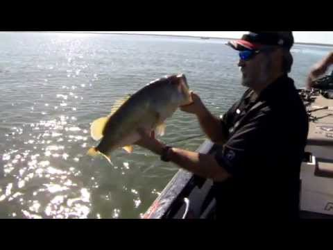 Zona 39 s awesome fishing show james overstreet falcon lake for Zona s awesome fishing show
