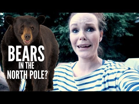 BEARS IN THE NORTH POLE? |Somers In Alaska Vlogs