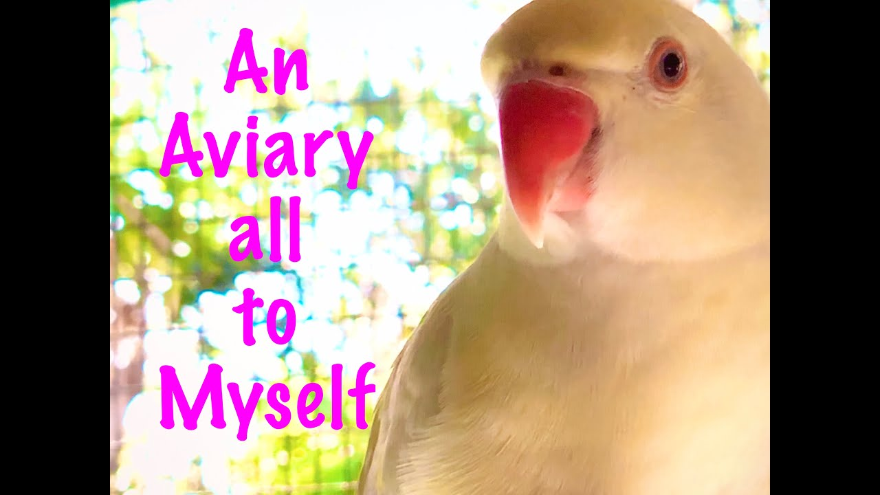 Indian Ringneck Aviary at Pds [outdoor aviary]