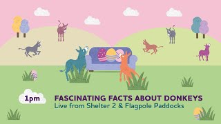 Fascinating facts about donkeys (Live) | Sanctuary From Your Sofa