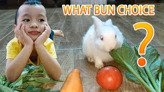 what does rabbit eat? What Bun Choice? Funny Rabbits - Funny Baby Videos - Cute Rabbit Video