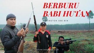JSC Aksi Berburu Babi dengan Senjata Api Laras Panjang