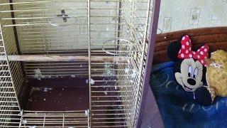 ✫Как Помыть Клетку БОЛЬШОМУ ПОПУГАЮ ЖАКО? As Poiit Cage Large Parrot Jaco