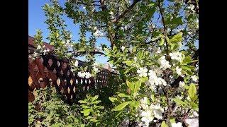 Наш сад и огород 10 мая/Посадила капусту, кабачки/ Помидоры и перцы  в теплице