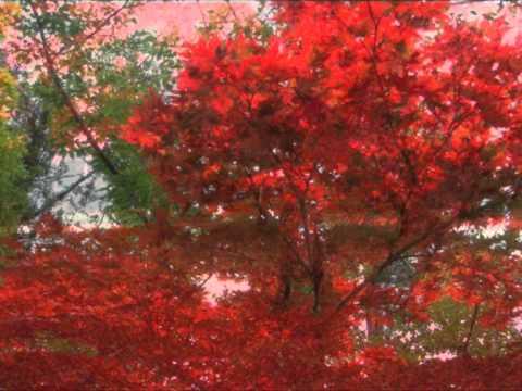 Acero rosso gaetano azzali youtube for Acero rosso canadese prezzo