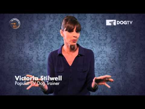 dogtv---victoria-stilwell-354-seconds-on-barking