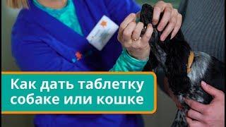 Как дать таблетку собаке или кошке. Ветеринарные советы