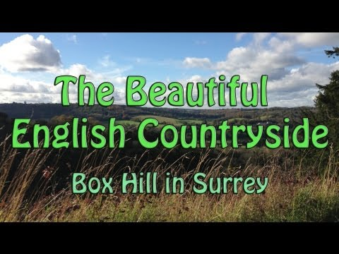The English Countryside At Box Hill in Surrey