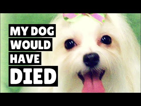 """My Dog Would Have Died..."" - Petful's Recall Alerts Saved Her"