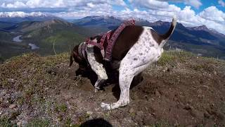 Alaska Hiking with my German Shorthaired Pointer