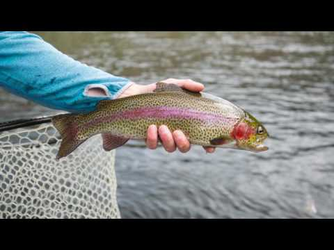 New England Fly Fishing Season 2016