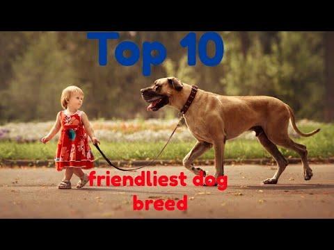 Top 10 friendliest dog breed   Dog Zone India  