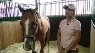 Участница ярмарки лошадей в Maxima Stables