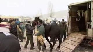 Rumänien/Deutschland: Die Pferdeseuche   Europa Aktuell