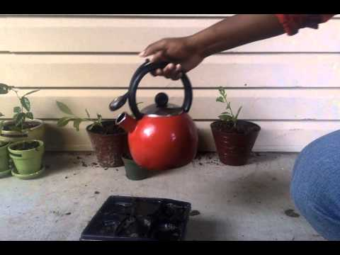 How to grow a baobab tree quickly