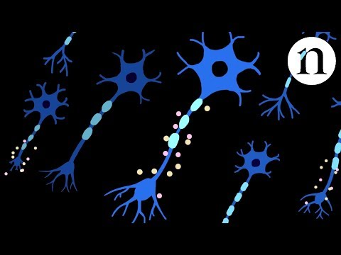 Nerve repair: Regeneration in spinal-cord injury
