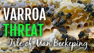 Honeybee Threat: Danger of the Varroa Mite reaching the Isle of Man