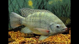 Рыбоводство в России (аквакультура)