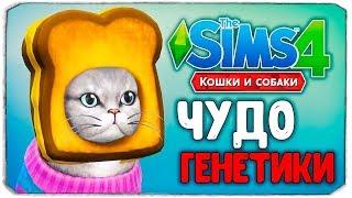 """ЧУДО ГЕНЕТИКИ, КОШКИ - The Sims 4 """"Кошки и Собаки"""""""
