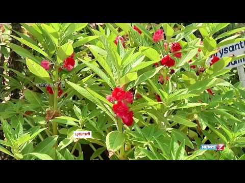 How to make your garden with Beautiful flower plants | Poovali | News7 Tamil