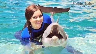 Nadando con Delfines y Focas - Miami Seaquarium
