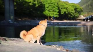 柴犬まる フォトブック発売 オフィシャルPV thumbnail