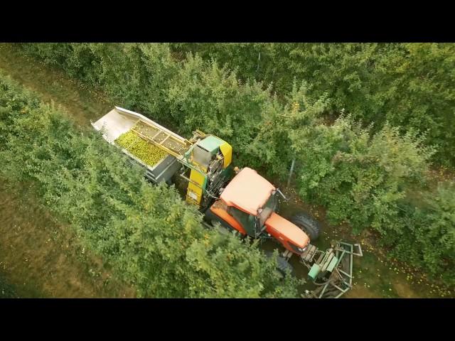 Récolte de Pommes à Jus - Kubota - MvTec - SOMAREF - Bretagne