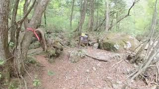 【おうちYOJOEN】5月の森林散歩