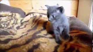Нашим котятам 1 месяц