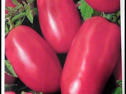 Новый сорт томатов КЕНИГСБЕРГ РОЗОВЫЙ