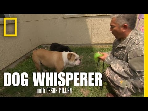 Fear of the Uniform | Dog Whisperer