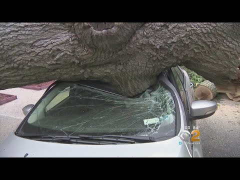 Giant Tree Injures Woman After Toppling Over In The Bronx