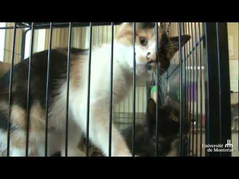 Une Deuxième Chance Pour Des Chats Et Des Chiens