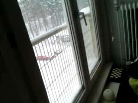 Snowy Weather In Denmark