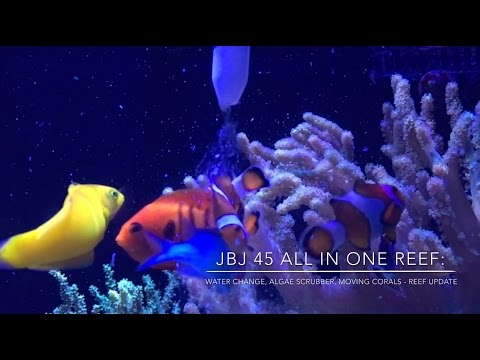 How To do Water Changes & Move Corals | Algae Scrubber & Lighting