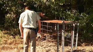 This Young Buck Got Caught In A Hog Trap | Lone Star Law