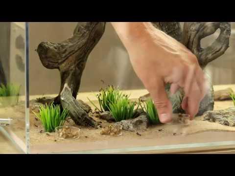 Amazing Ant Colonies: Black Field Ants