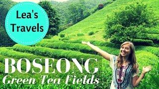 Boseong Green Tea Field - 보성녹차밭 대한다원
