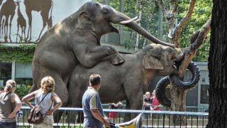 5 Животных с однополыми отношениями