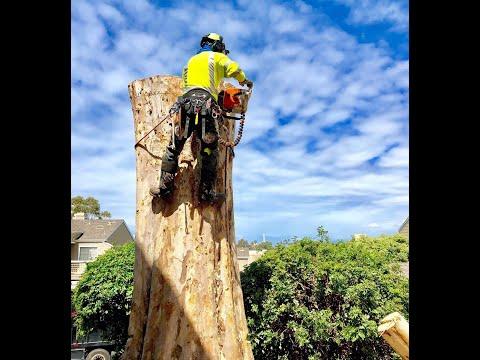 recorte de eucalipto controlado con soga y polea mucha accion y adrenalina