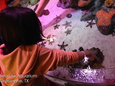 Sea Life Aquarium Grapevine, Dallas, TX
