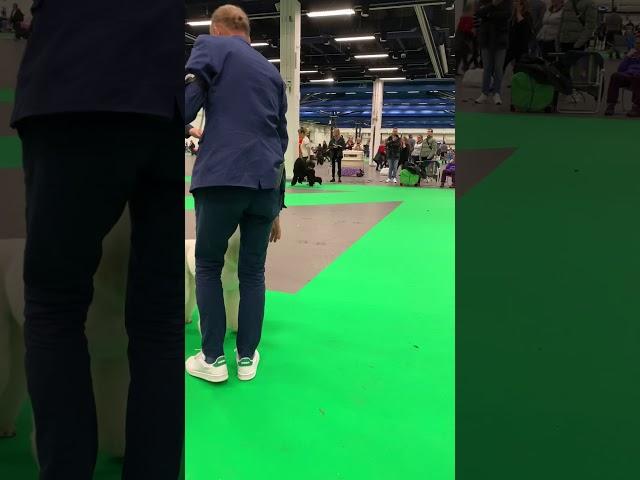 Storpudel tikar Stockholms mässan 2019