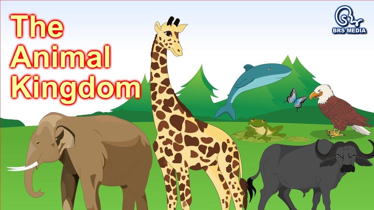 The Animal Kingdom | Animal Classification | Classifying Animals | Class 4  | HD Video